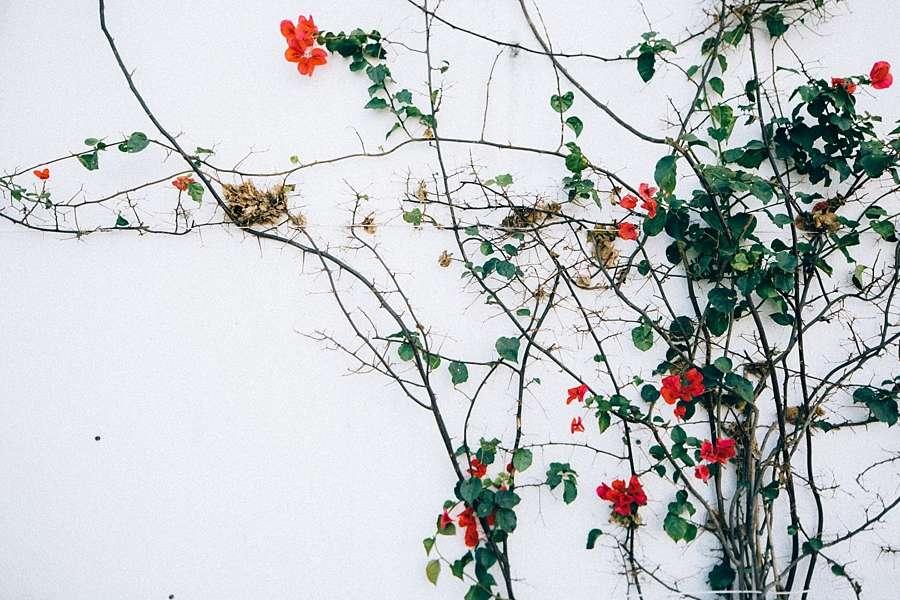 Anna_Jones_Photography_Vsco05BEFORE17